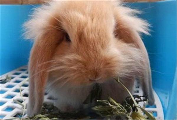 自由自在的兔子才是最可爱的.