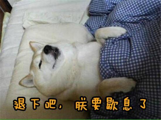 分享一组实用的柴犬表情包,萌到要化了。(王尼美)