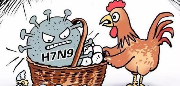 不信谣不传谣 关于H7N9禽流感 这些你应知道