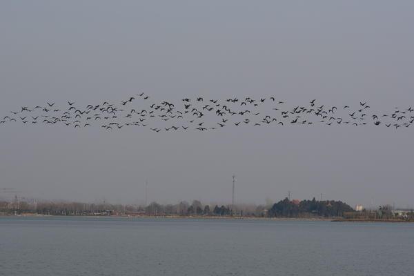 大美菏泽!菏泽已建立4处国家级、8处省级湿地公园