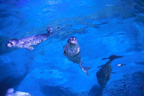 威海神游海洋世界,位于华夏城景区北侧,馆内主要包括鱼类世界,珊瑚海