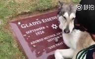 主人离世时,宠物送他最后一程