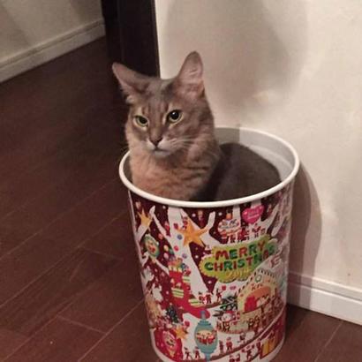 这样的猫桶,我想来十桶。