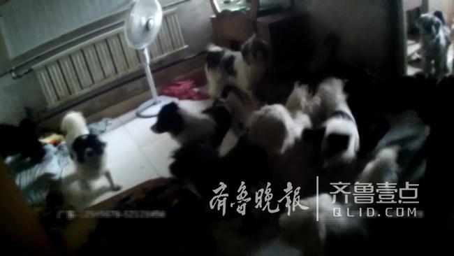 济南一八旬独居老人养了19只狗!犬吠扰民