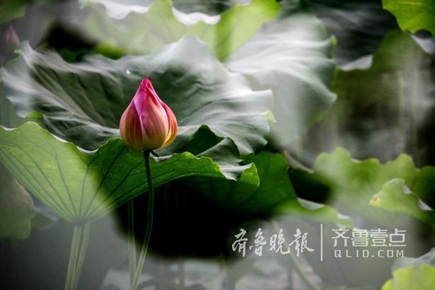 拍课堂学员郭晓红