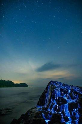 """日本本州岛西南部海湾 因当地独有的有""""蓝眼泪""""之称的海萤聚集,这些石头被称为""""哭泣的石头""""。(微博网友@咱们去旅游摄影)"""
